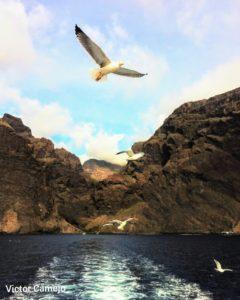 hiking in Tenerife Wandern Auf Teneriffa Gregorios wanderfamily
