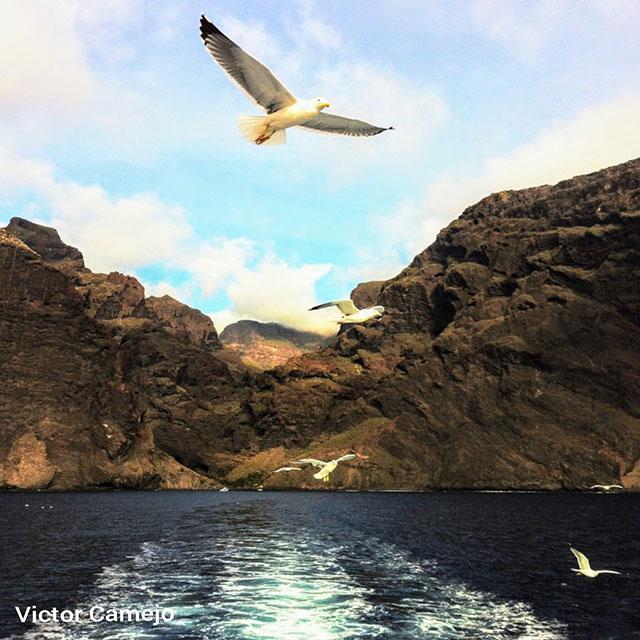 MASCA RAVINE hiking in Tenerife Wandern Auf Teneriffa Gregorios wanderfamily