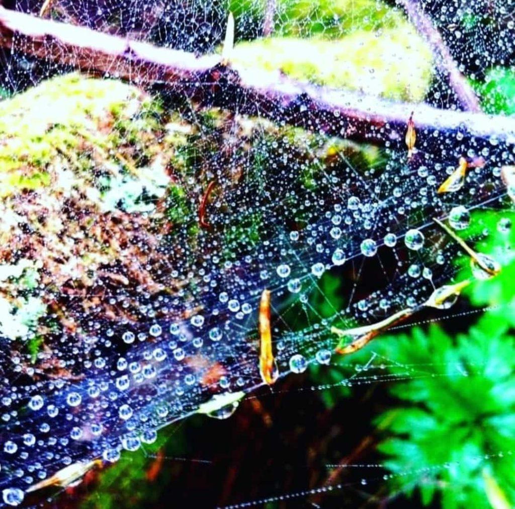 Water drops in Anaga forest.hiking in Tenerife Wandern Auf Teneriffa Gregorios wanderfamily