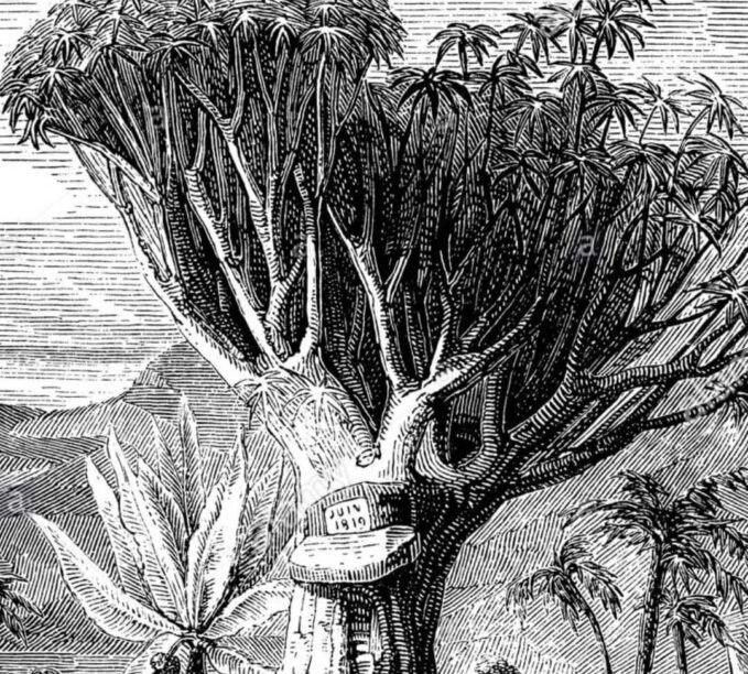 Humboldt Orotava . Gregorios Tenerife