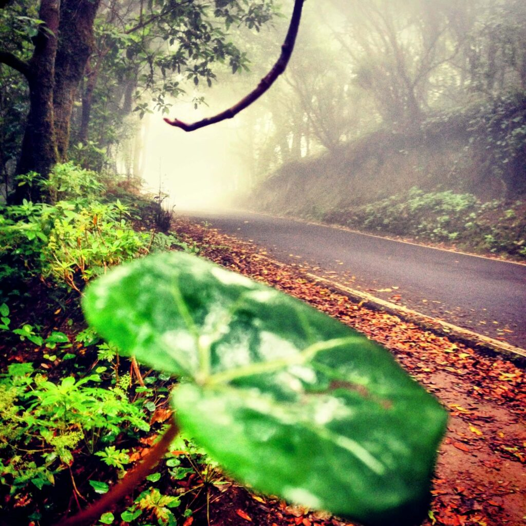 Anaga Gregorios Tenerife. wandern, senderismo, trekking, hiking